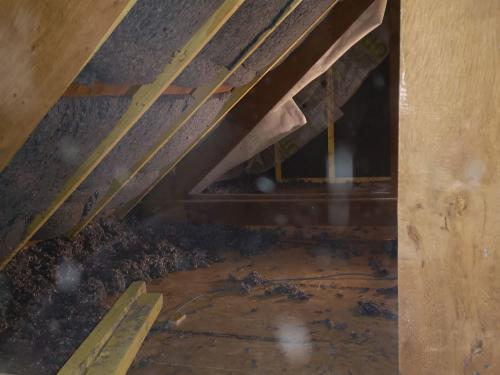 Rénovation bâtisse ancienne avec isolations écologique des rampants à Saint Nolff